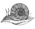 Vector illustration of a totem animal Snail on leaf in black and Royalty Free Stock Photo