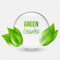 Vector illustration of transparent shere with green leaves for design, business cards. Transparent background.