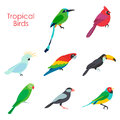 Vector illustration of tropical birds icon