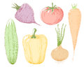 Vector illustration vegetables. Royalty Free Stock Photo