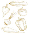 Vector illustration vegetables. Royalty Free Stock Images