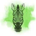 Vector illustration with zebra head hand drawn sketch Royalty Free Stock Photo