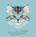 Vector illustrative portrait of domestic kitten cute grey tabby Stock Photos