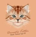 Vector illustrative portrait of domestic kitten cute red tabby Stock Image