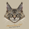 Vector illustrative portrait of maine coon cat young cute pedigreed kitten Stock Images