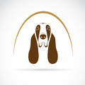 Vector image of an basset hound on white background Stock Photo