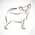 Vector image of an chihuahua dog on white background Stock Image