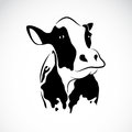 Vector image of an cow on white background Royalty Free Stock Photo