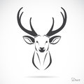 Vector image of an deer head on a white background Stock Photo