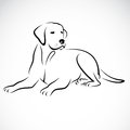 Vector image of an dog labrador on white background Royalty Free Stock Photo