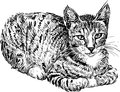 Vector image domestic cat Stock Photo