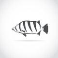 Vector image of an fish (Siamese tiger fish) Royalty Free Stock Photo