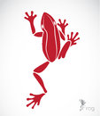 Vector image of a frog on white background Stock Photography