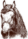 Vector image of a head of harnessed horse Royalty Free Stock Images