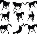 Vector image horse silhouette in looking good pose on white background illustration Stock Photography