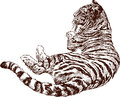 Vector image of a lying tiger Royalty Free Stock Photo