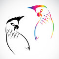 Vector image of an parrot on white background Royalty Free Stock Photo