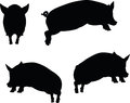 Vector image pig silhouette in jump pose isolated on white background illustration Stock Photography