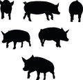 Vector image pig silhouette in a trot position isolated on white background illustration Stock Images