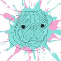 Vector image of a portrait of a pug dog face.