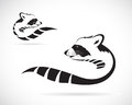 Vector image of a raccoon on white background Royalty Free Stock Image