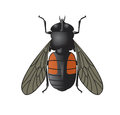 Vector image simbol big horsefly Royalty Free Stock Photo