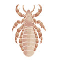 Vector image simbol big louse Royalty Free Stock Photography
