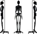 Vector Image - skeleton silhouette in default pose  on white background Royalty Free Stock Photo