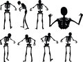 Vector Image - skeleton silhouette in standing in cage pose  on white background Royalty Free Stock Photo