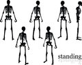 Vector Image - skeleton silhouette in standing pose on white background Royalty Free Stock Photo