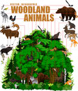 Vector infographic - woodland forest with animals