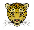 A vector ink illustration of a leopards face Stock Photo