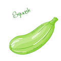 Vector isolated cartoon fresh hand drawn squash. Royalty Free Stock Photo