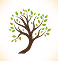 Vector isolated tree decorative stylized plant image of crown Royalty Free Stock Images