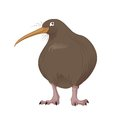 Vector Kiwi Royalty Free Stock Photos