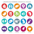 Vector lab mouse internal organs and tissues icon set