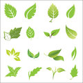 Vector leave icon set in style Royalty Free Stock Photo