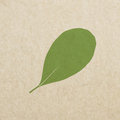 Vector leaves green grunge paper texture, distressed background Royalty Free Stock Photo
