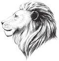 Vector lions head, illustration. Lion`s hand drawn profile.