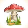 Vector logo red Toadstool Mushroom