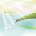 Vector macro natural bright background. Green grass with dew and Royalty Free Stock Photo