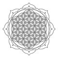 Vector mandala sacred geometry illustration Royalty Free Stock Photo