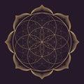 Vector mandala sacred geometry illustration