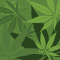 Vector marijuana background green with leaves Stock Photo