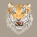 Vector menacing growling tiger closeup portrait of amur Royalty Free Stock Images