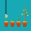 Vector money tree growth concept in flat style Royalty Free Stock Photo
