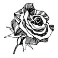 Vector multicolor rose flowers. stylized roses. Royalty Free Stock Photo