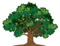 Vector oak tree Royalty Free Stock Photo