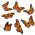 Vector Orange Tropical flying Butterflies Illustration Set