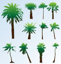 Vector palm trees set. Stock Photography